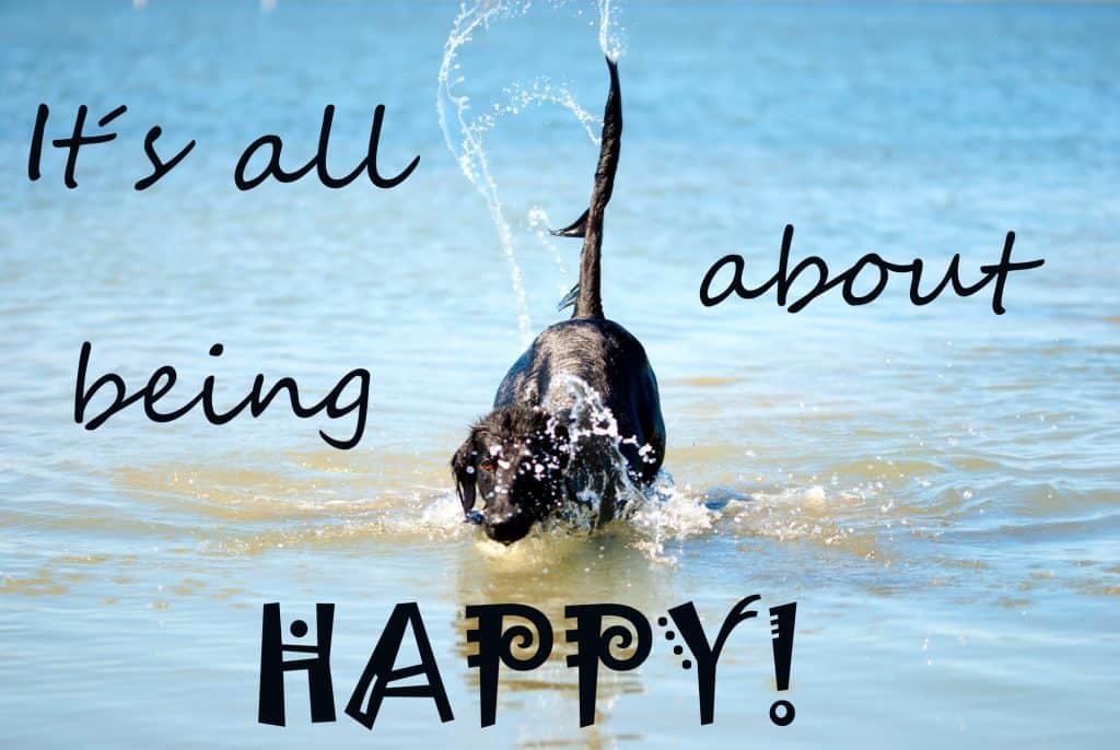 A dog splashing in the water on his birthday
