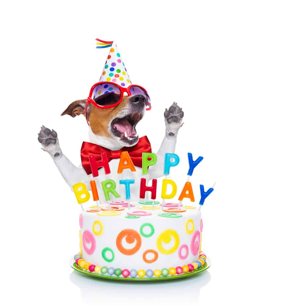 funny birthday wishes for dog lovers