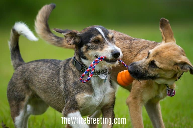 Two dogs playing together with a ball