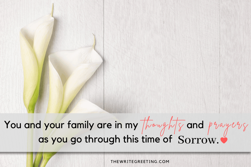 Lilies on a white background with sympathy text