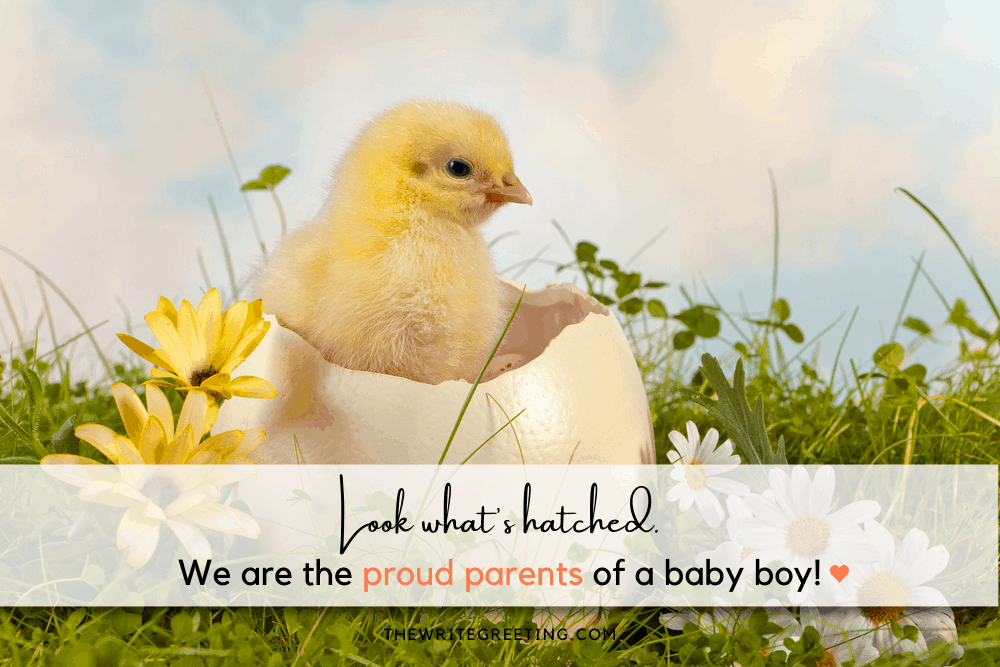 Little chick hatching out of egg